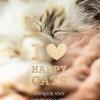 Happy-Cats-Minigids